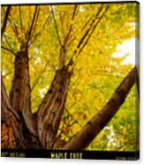 Maple Tree Poster Canvas Print