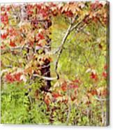 Maple Tree W C  Canvas Print