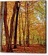 Maple Woods Trail 3 Canvas Print