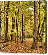 Maple Woods Trail Canvas Print