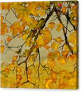 Maples In Autumn Canvas Print