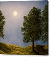Maples In Moonlight Canvas Print