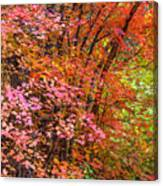Maples In Pink Canvas Print