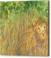 Mara The Lioness Canvas Print