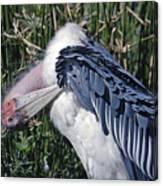 Marabou Stork Canvas Print
