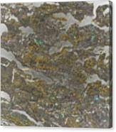 Marble Bark Colored Abstract Canvas Print