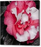 Marble Camellia Canvas Print