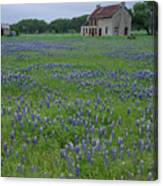 Marble Falls Texas Stone House And Bluebonnets Canvas Print