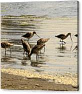 Marbled Godwit Birds At Sunset Canvas Print