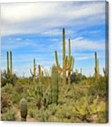 March Flowers And Cactus Canvas Print