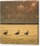 March Of The Geese Canvas Print