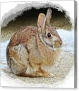 March Rabbit With Vignette Canvas Print