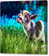 Baby Goat Kid Singing Canvas Print