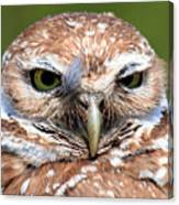 Marco Burrowing Owl - I Know What You're Thinking Canvas Print