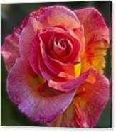 Mardi Gras Rose Canvas Print