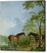 Mare And Stallion In A Landscape Canvas Print