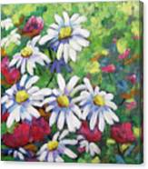 Marguerites 001 Canvas Print