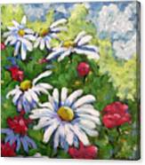 Marguerites 002 Canvas Print