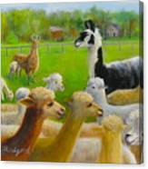 Mariah Guards The Herd Canvas Print