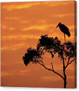 Maribou Stork On Tree With Orange Sunrise Sky Canvas Print