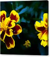 Marigold In Living Color Canvas Print