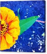 Marigold Under The Stars Canvas Print