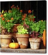 Marigolds And Pumpkins Canvas Print