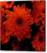 Marigolds In Orange Light Canvas Print