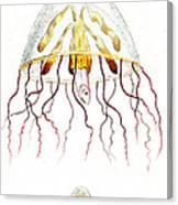 Marine Mollusc Divulging Fish Canvas Print