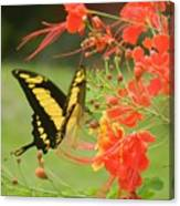 Mariposa Amazonica Canvas Print