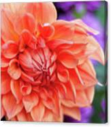 Market Flowers  Canvas Print