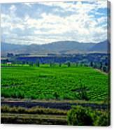Marlborough Wine Country Canvas Print