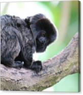 Marmoset Sitting Perched In A Tree Canvas Print