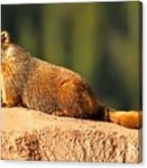 Marmot Life Canvas Print