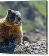 Marmot On The Ridge Canvas Print
