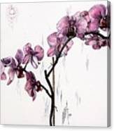 Marning Orchids Canvas Print