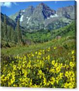 210403-v-maroon Bells And Sunflowers  Canvas Print