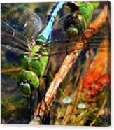 Married With Children Dragonflies Mating Canvas Print
