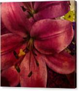 Marsala Lily Canvas Print