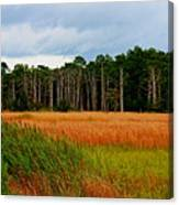 Marsh And Trees Canvas Print