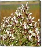 Marsh Blooms Canvas Print