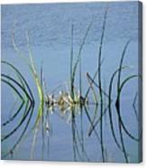Marsh Design Canvas Print