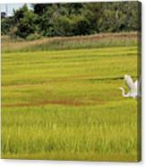 Marsh Egrets Canvas Print