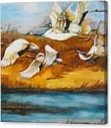 Marsh Flight Canvas Print