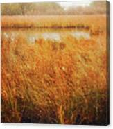 Marsh Grass And Snow Canvas Print