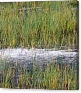 Marsh Grasses Canvas Print