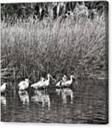Marsh Hunters Canvas Print