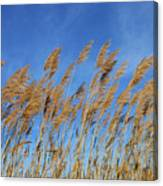 Marsh In The Wind Canvas Print