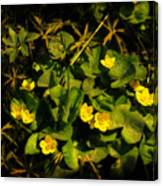 Marsh Marigolds Canvas Print