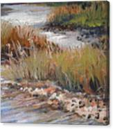 Marsh Reflections Canvas Print